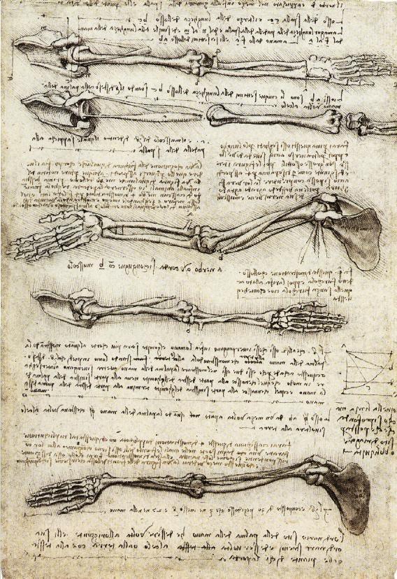 Circaa // Leonardo Da Vinci  Leonardo Da Vinci Resume